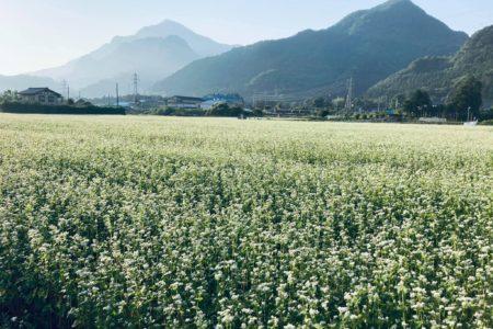 荒川花見の里のそば畑です。